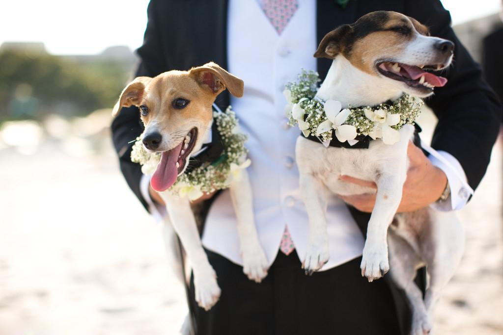 matrimonio con animali